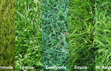 Selecting the Right Turf For Your Lawn