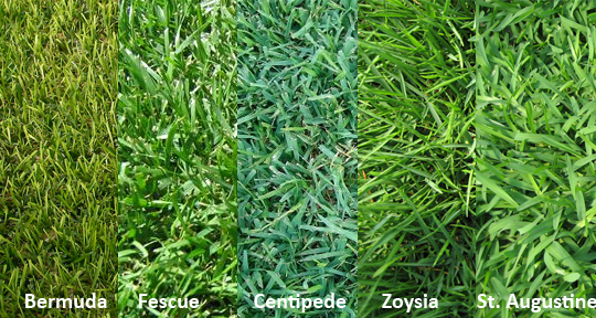 Selecting The Right Turf For Your Lawn Murrays Landscape Services