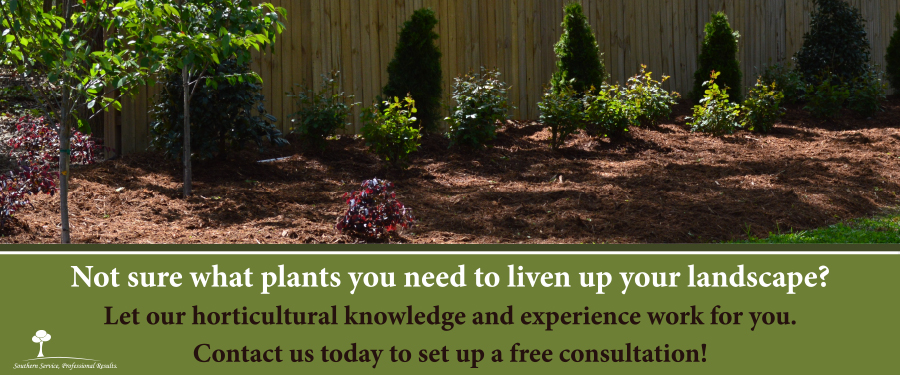 Providing Superior Lawn Care and Landscape Maintenance to Durham, NC and  Surrounding Areas. - Murray's Landscape Services - Quality Lawn Care